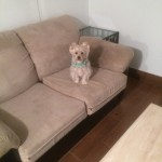 Miami-Sofa-Pet-Stain-Cleaning