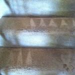 Miami-Stairs-Carpet-Cleaning