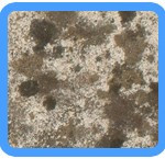 Water-Mold-Removal-Miami