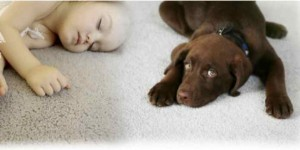dog & baby on the carpet